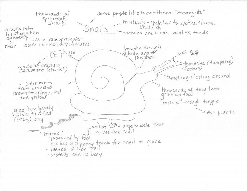 snail-mind-map